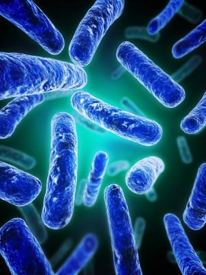 probiotics_degrade_chemicals.jpg