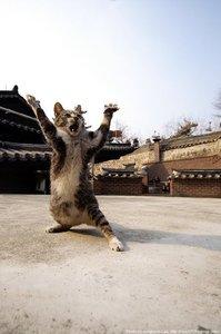 cat_kung.jpg